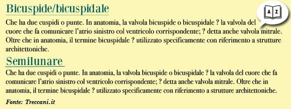 Bicuspide - semilunare